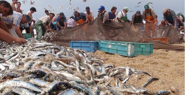 CDS questiona tutela sobre diminuição do limite de capturas de sardinha