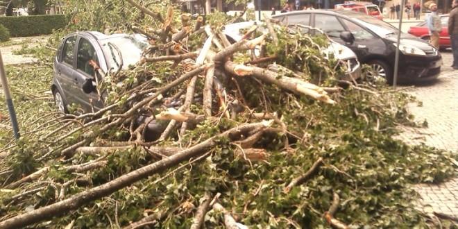 Duas viaturas danificadas por derrube de árvore no jardim do Cáster