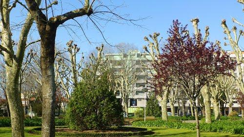 CDU questiona abate de árvores no Jardim Almeida Garrett