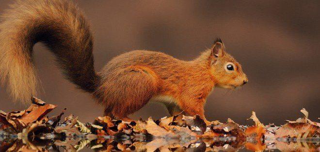 População ajuda biólogos a contar 1.400 esquilos