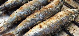 E você, já comeu uma sardinha hoje?